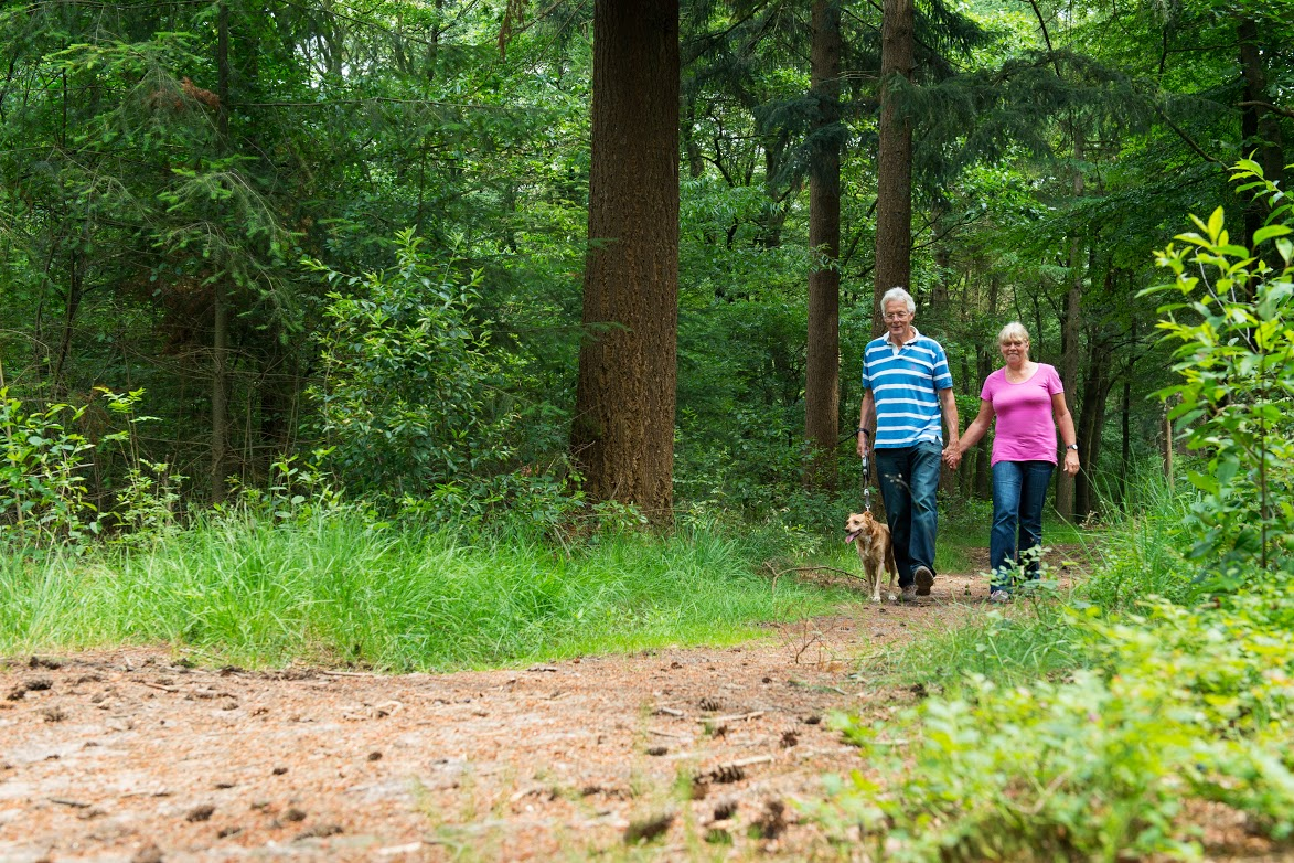 An older couple, husband and wife, walk through the woods hand-in-hand, walking their dog as well